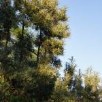Inzwischen sind selbst die Bäume stattlich gewachsen.