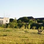 Das Gelände besteht zu großen Teilen aus einer weitläufigen Graslandschaft. Das freut nicht nur Hundebesitzer.