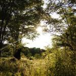 Auf dem Gelände gibt es viele schöne Verstecke für Mensch und Tier.