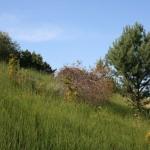 Büsche, Laub- und Nadelbäume - die Vegetation ist wild und vielfältig.